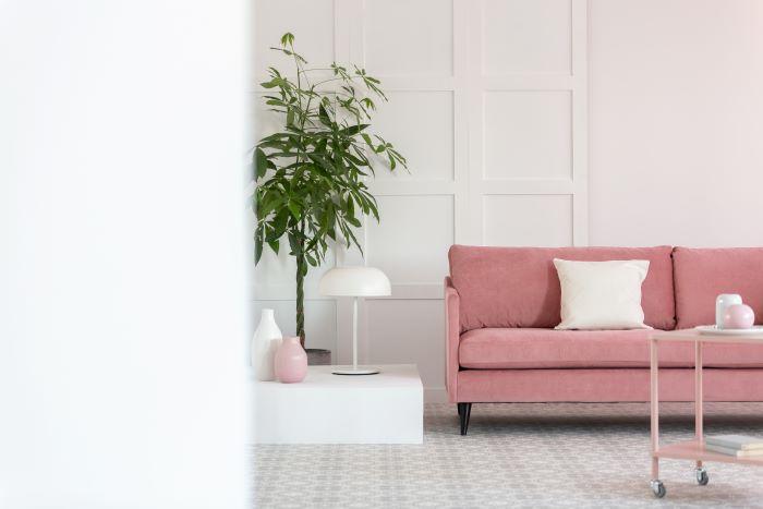 Valorizza la tua casa con la consegna piante Milano