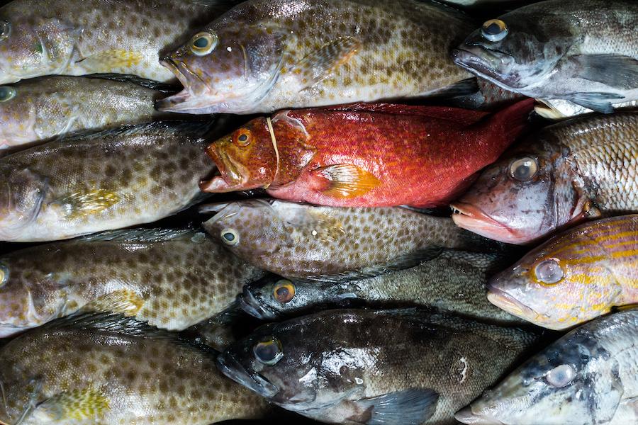 Pesce a domicilio: a chi rivolgersi per un servizio di qualità